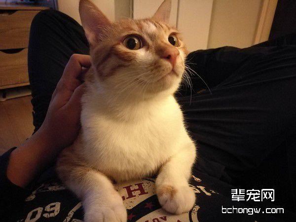 小胖猫在抽屉躲猫猫?真相让主人忍不住