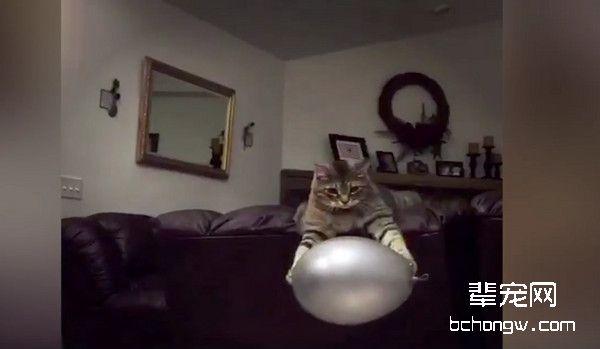 就是看气球不顺眼! 喵星人来回打最后霸气