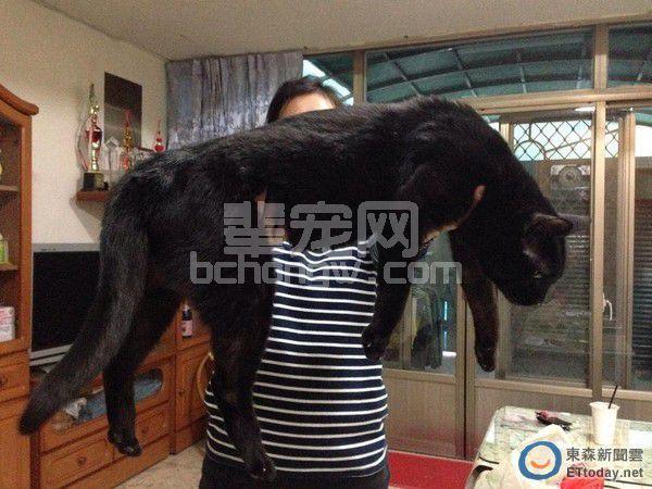 19年黑猫长成