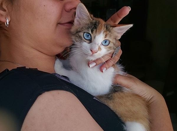蓝眼白猫图片