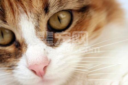 猫自主神经功能障碍