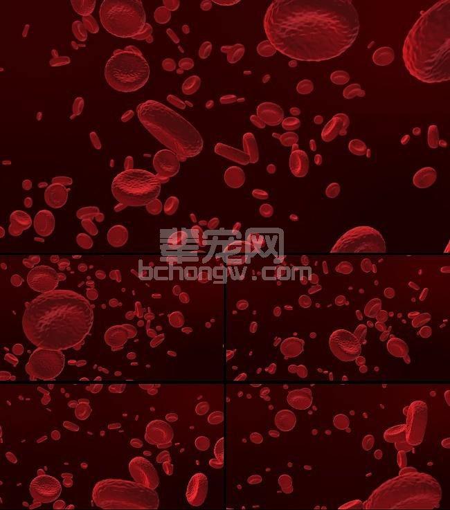 血细胞组织需求增加
