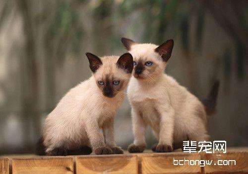 如何驯服猫咪图片