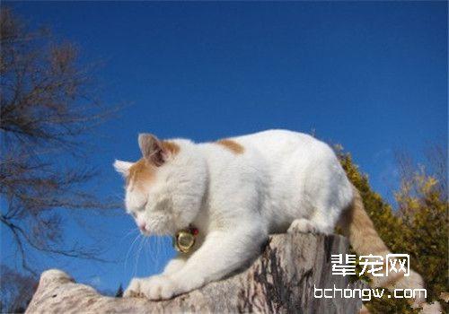 改正猫咪不良行为的方法