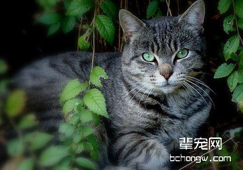 猫咪吃维生素e图片