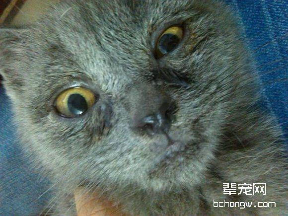 猫杯状病毒治疗特效药图片