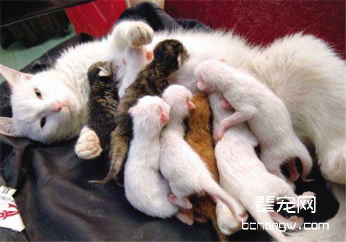 母猫吃小猫后什么反应图片