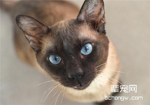 猫咪鼻炎的临床症状_猫咪鼻炎的临床症状主要有_猫咪鼻炎怎么治疗