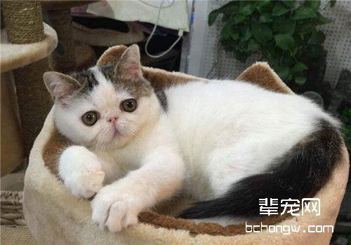 猫有机磷中毒图片