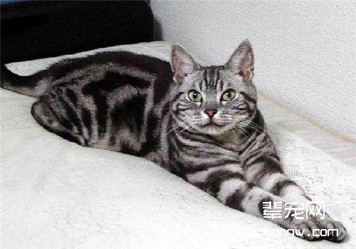 猫咪肠炎的治疗原则_猫咪得了肠炎怎么治疗_猫咪肠炎症状