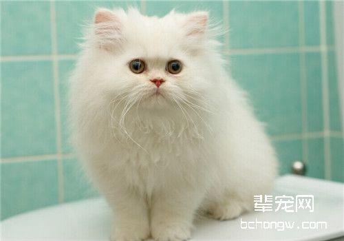 猫咪脑炎的病因流行病学研究图片