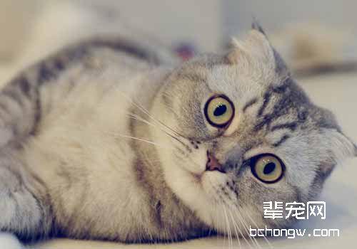 猫咪小便不出来怎么办图片