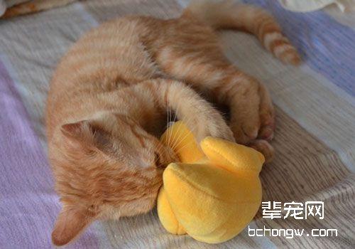 猫咪异位性皮炎图片
