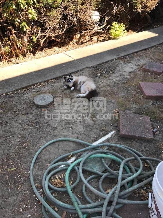 男子发现一只从未见过的猫咪,网友看到之后表示:行走中的人民币