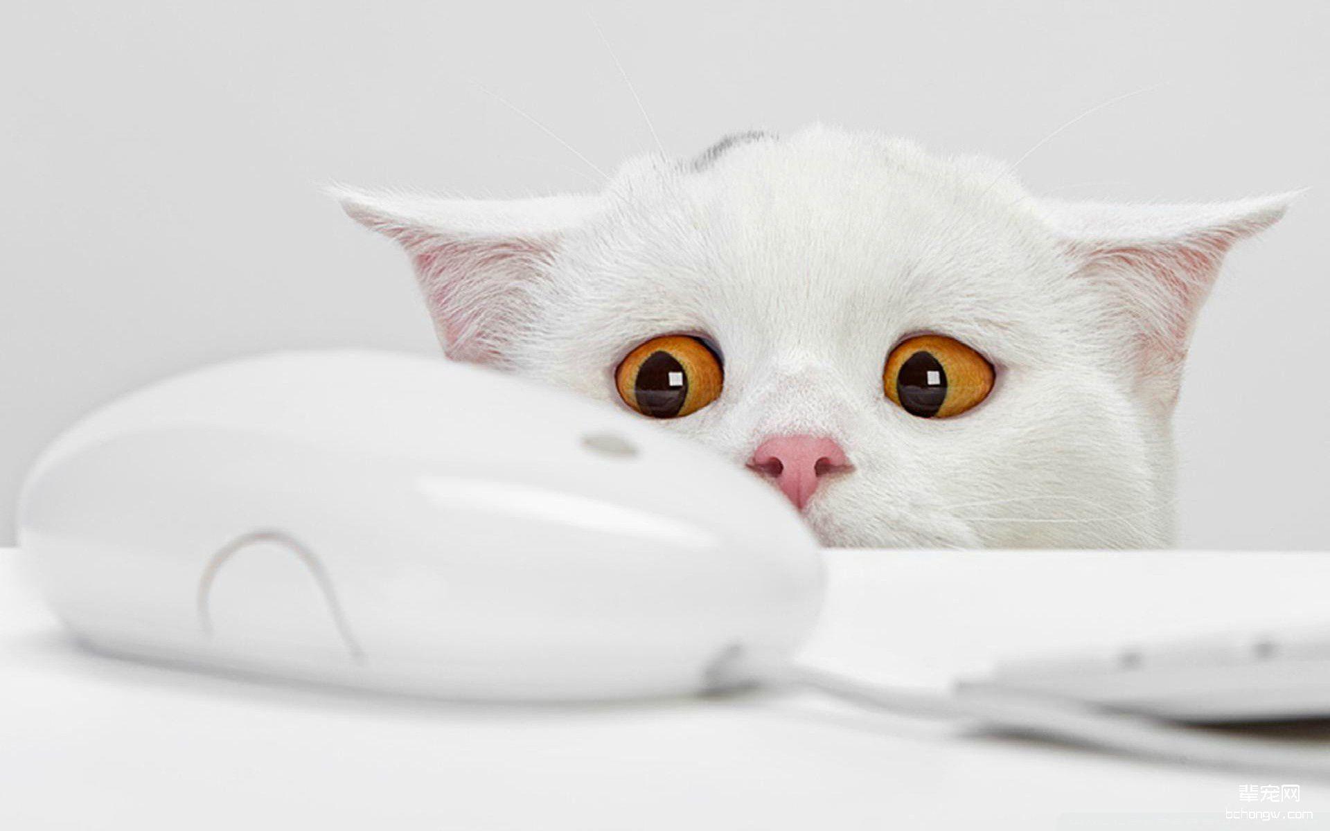 壁纸 动物 猫 猫咪 小猫 枕头 桌面 1920_1200