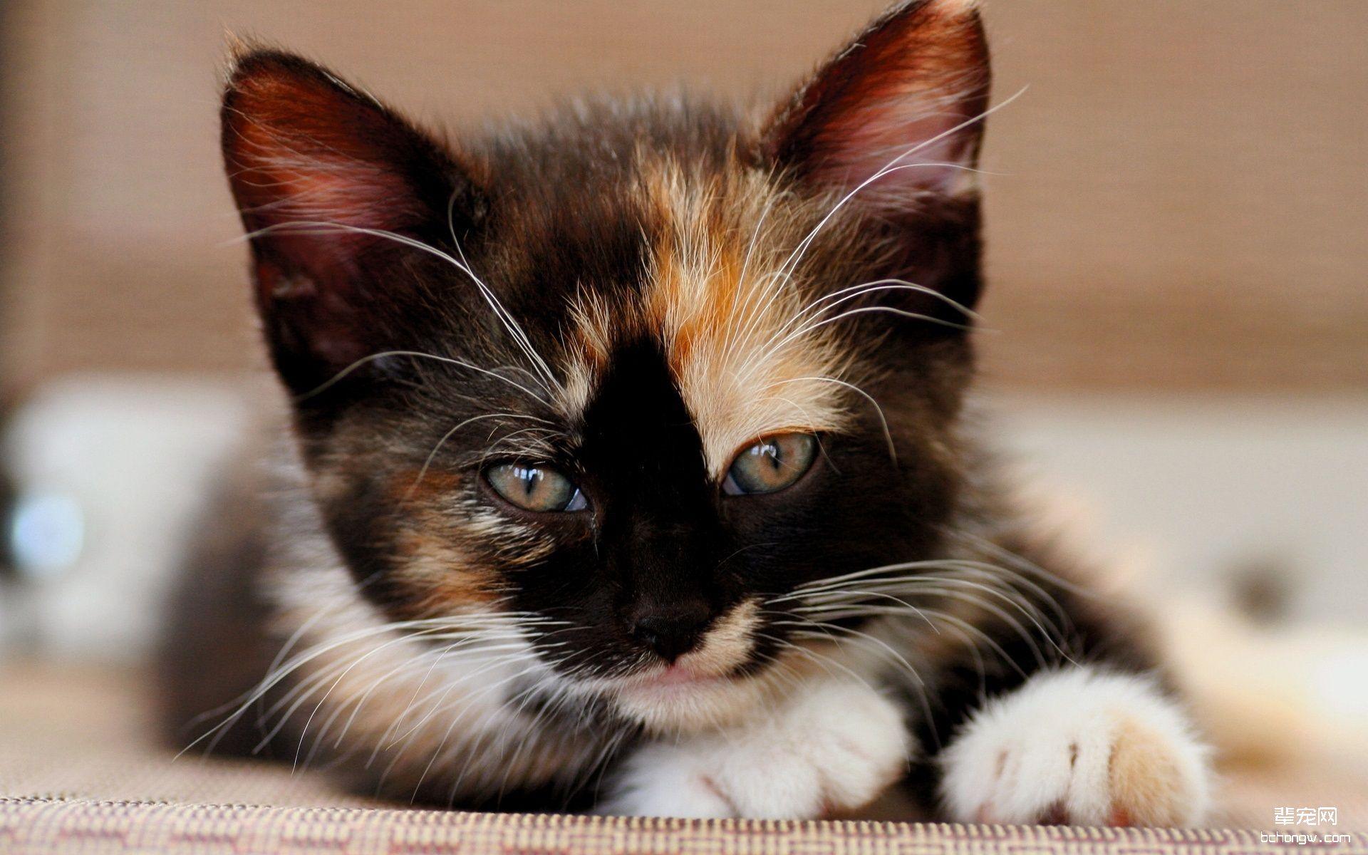 萌猫大图桌面壁纸