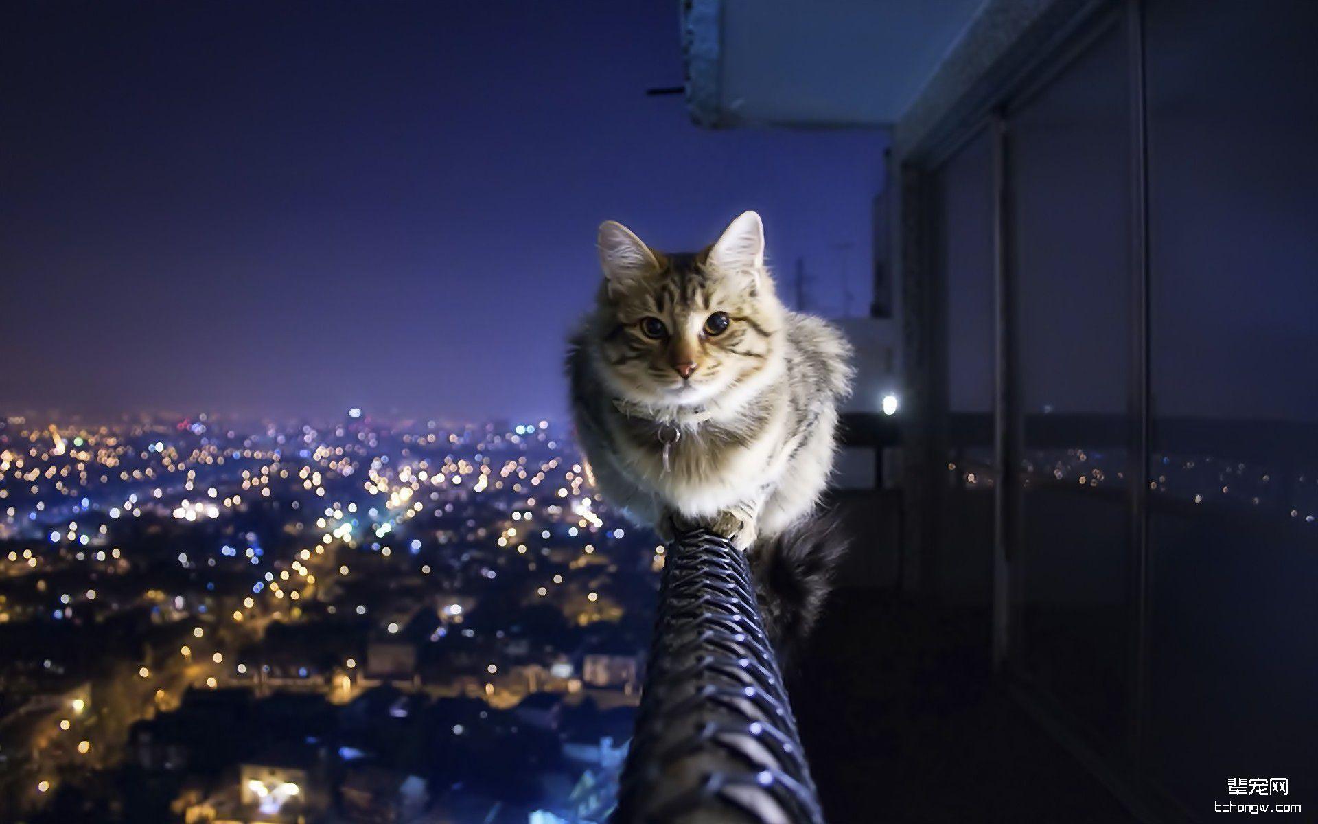 可爱猫咪高清壁纸第6张图片
