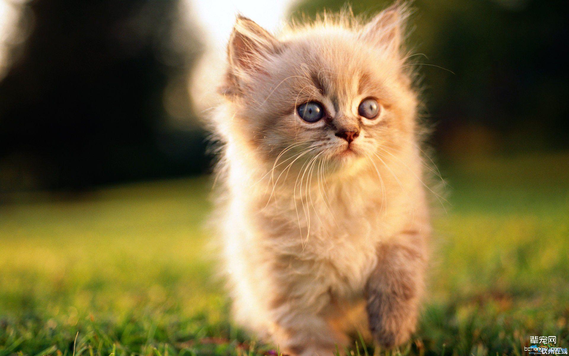 萌图鉴赏 猫咪 可爱的猫咪高清壁纸  1/ 10
