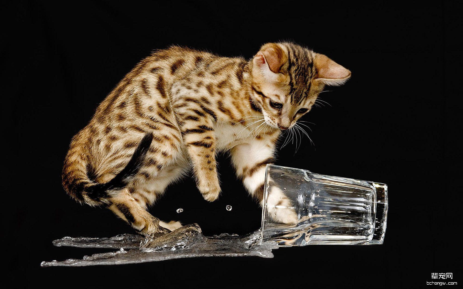 可爱的猫咪高清壁纸