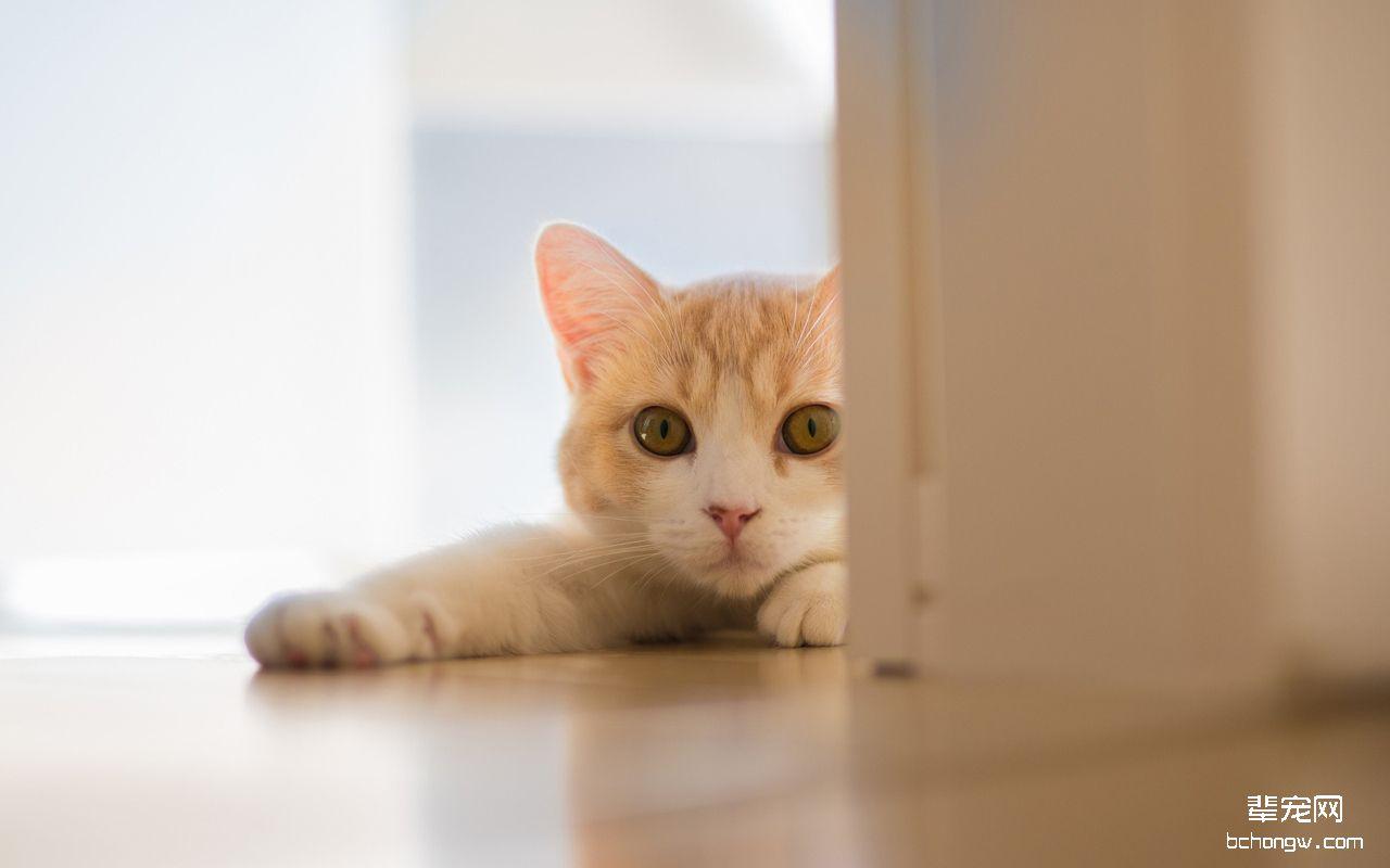 萌图鉴赏 猫咪 可爱猫咪电脑桌面壁纸