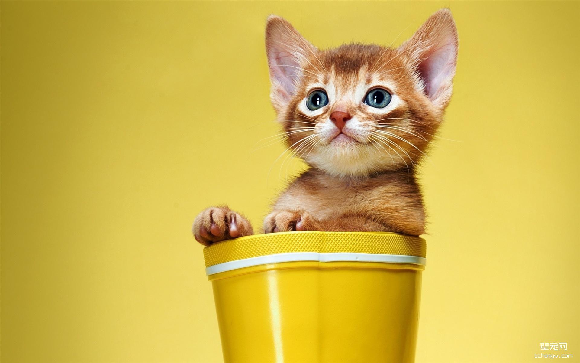 可爱好玩的小猫电脑壁纸
