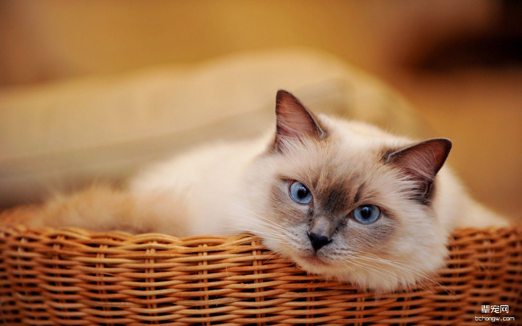 萌图鉴赏 猫咪 可爱猫咪壁纸桌面