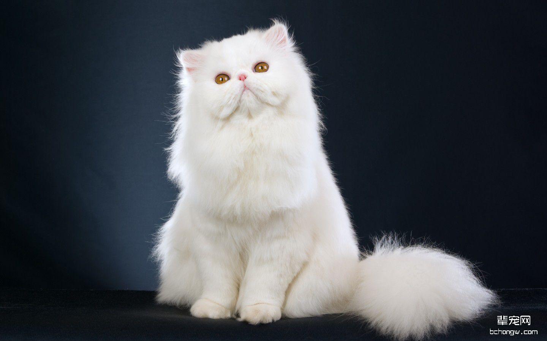 新闻资讯_高清萌猫宽屏壁纸桌面-辈宠网