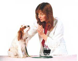 有关于犬类疫苗的N秘密