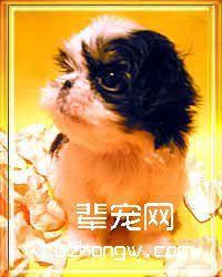 狗的定期洗澡(二)