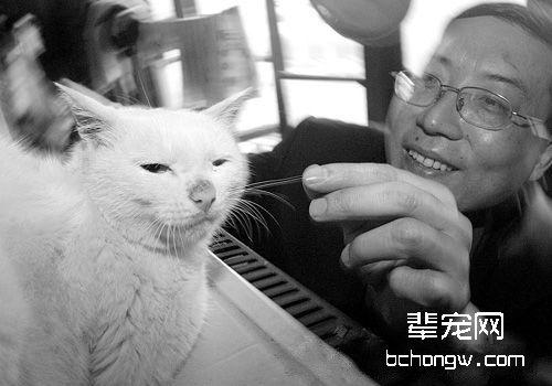 猫咪救人的故事你听说过吗