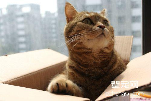 猫咪为什么喜欢箱子