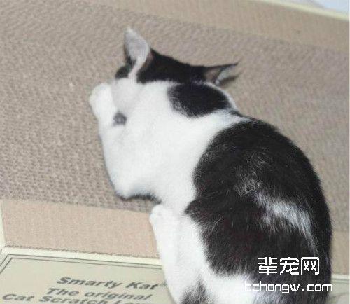 如何让猫咪晚上不闹腾图片