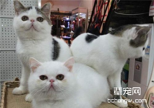 猫瘟的治疗措施
