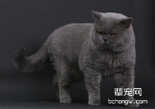 如何判断猫咪是否有真菌性皮肤病