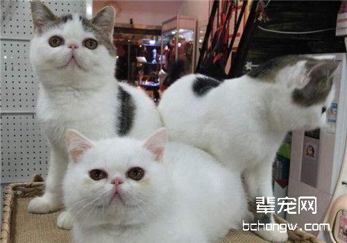 猫有机磷中毒的诊断要点