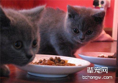 猫咪直肠脱的治疗方法