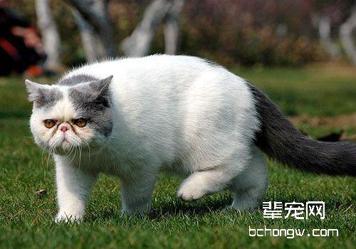 夏季如何预防猫咪肠胃炎