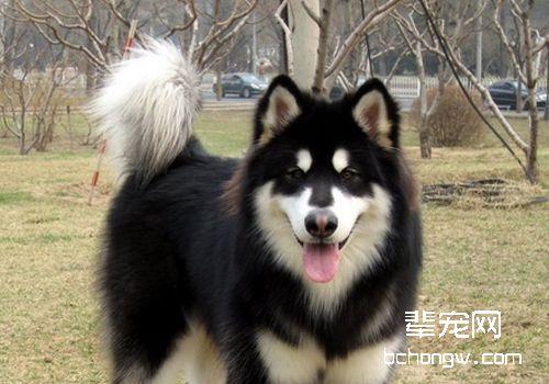 犬疥螨病的治疗方法