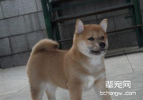 犬疥螨病的检查方法