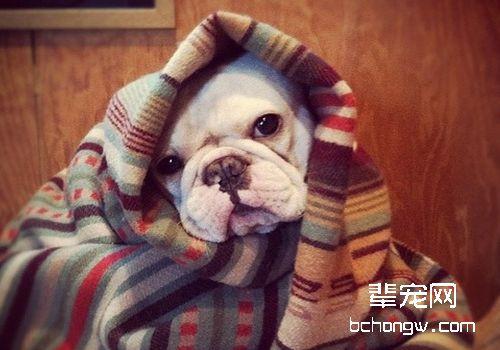 得皮肤病的狗能洗澡吗