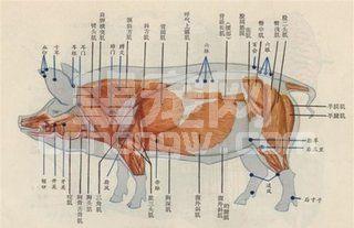 经验分享:使用南瓜子治疗猪蛔虫病