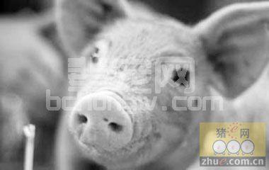 猪流行性感冒诊断与综合防治