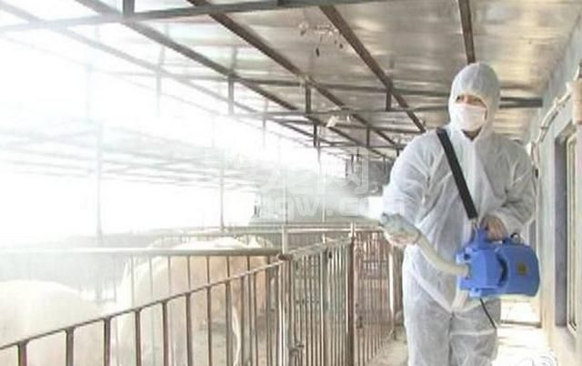 你的养猪场是如何做卫生防疫工作的?必须要有健全的防疫制度