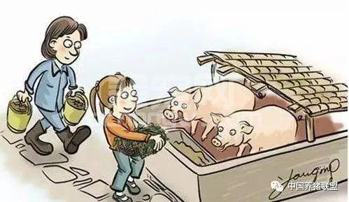 【非洲猪瘟】为何难以防控?专家矛头直指...