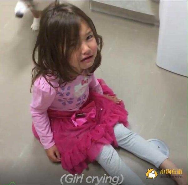 柯基坐在小女孩腿上安慰哭泣的小主人!图片